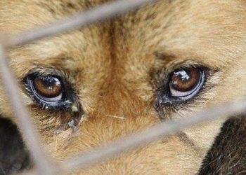 Фото: сайт zoolog.guru